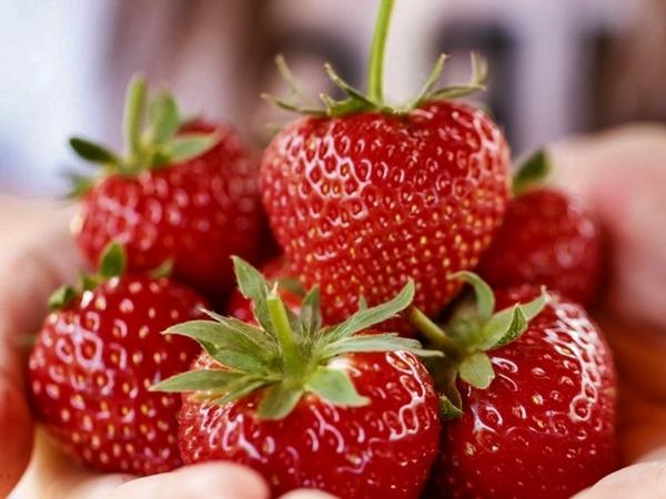 fresas en una mano