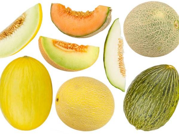 Variedades de melón