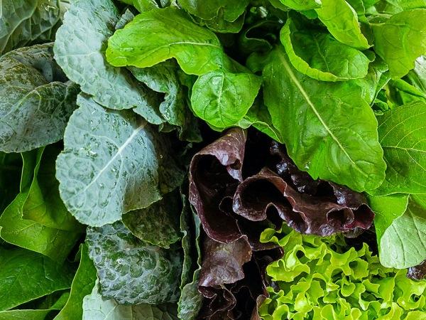 Principales beneficios de los alimentos de hoja verde